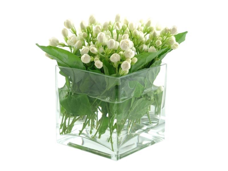 10 ไม้ดอกไม้ประดับ ตกแต่งบ้านสวยสดชื่น